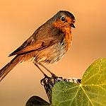 wildlife benefits from rain water harvesting