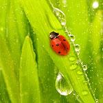 rain water harvesting benefits the ecosystem
