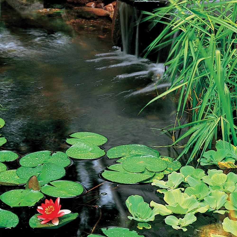 lily pad pond, koi pond design