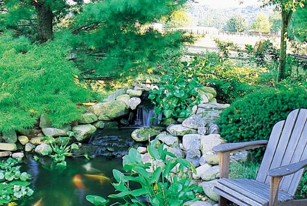 yard pond designs