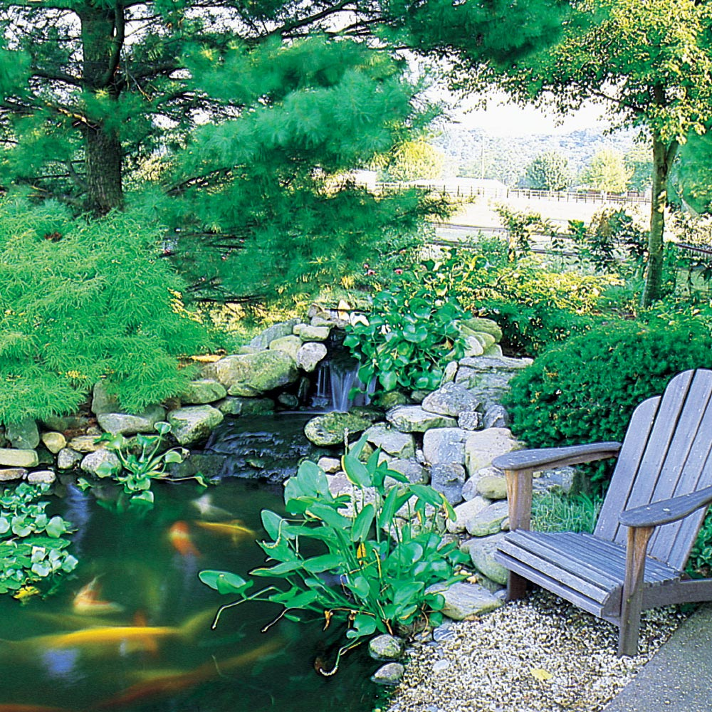 yard pond designs