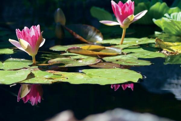 water garden designs